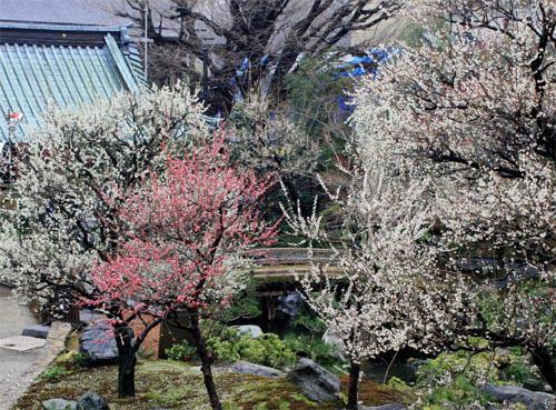毎年多くの人で賑わう、江戸から続く梅の名所!!