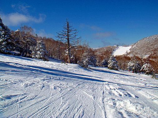 志賀高原中央エリア タンネの森オコジョスキー場